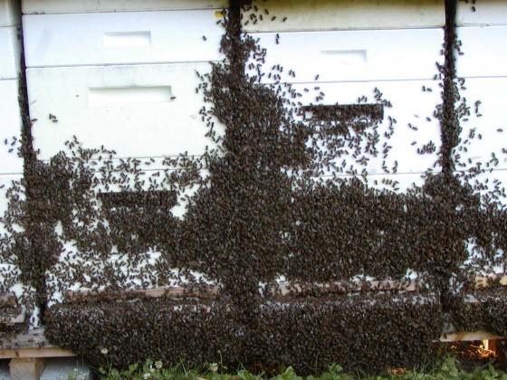 Bienen-auf-Urlaub