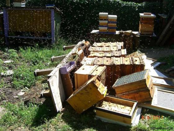 Bienenstand nach Unwetter 003 -a.jpg