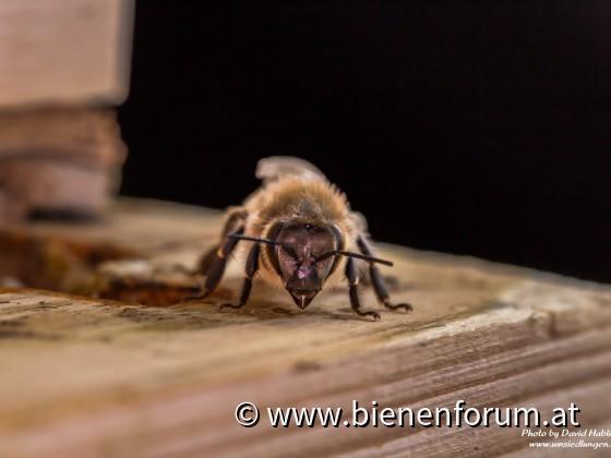 Bienenwächterin