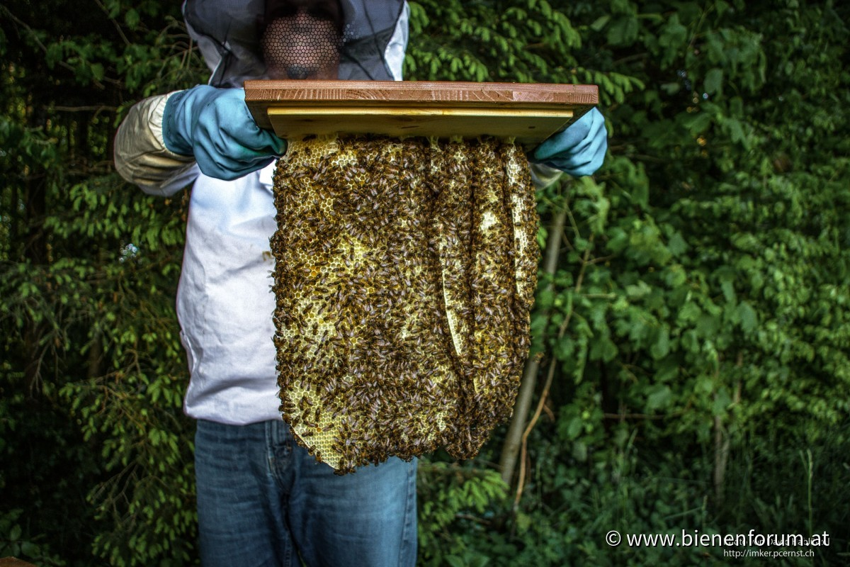 doofe Bienen
