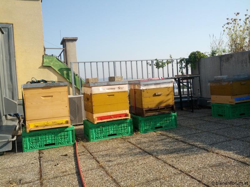 Bienen mit Aussicht