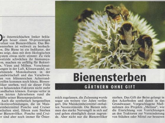 Bienensterben: Gärtnern ohne Gift