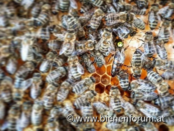 <3 Bees