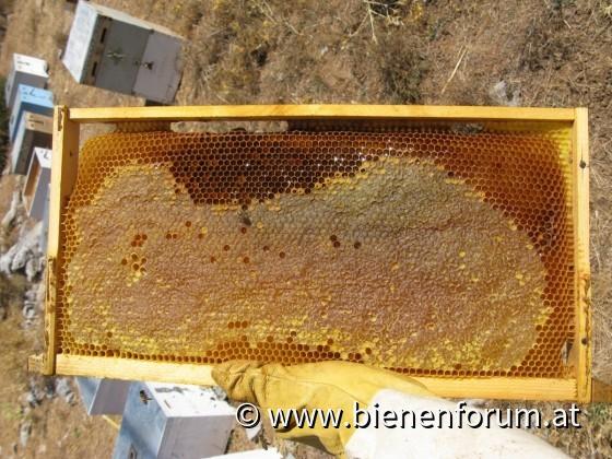 Honigernte Omalos Plateau