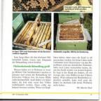 Bienenwelt4