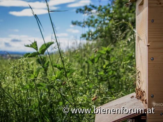 Bienen Standort