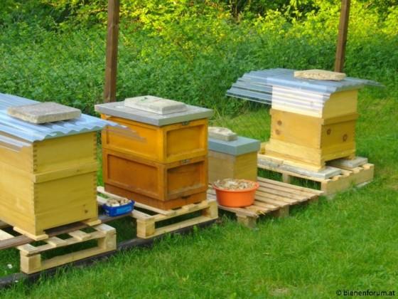 Unser Bienenstant