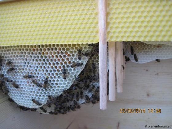 Bienenwiege