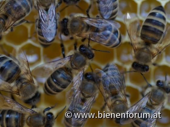 Honig einlagern