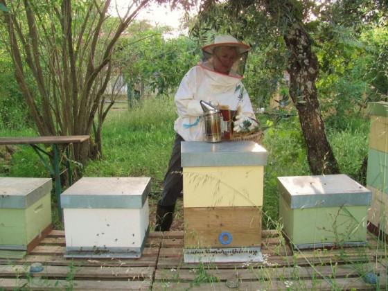 Bienenstand.18.Jun.11