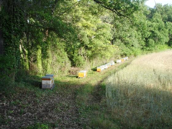 Bienenstand im Lavendel