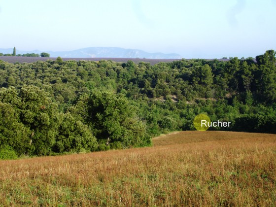 Bienenstand unter dem Plateau