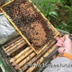 Bienen vom Klaus auf Teneriffa