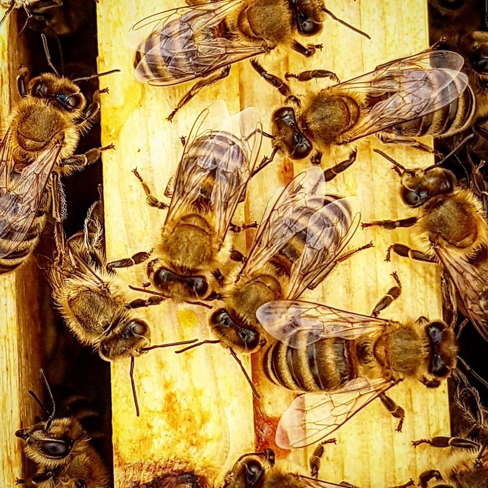 Bienen Forum