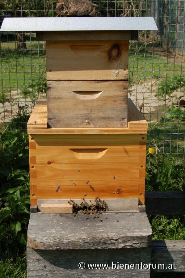 10er Dadant mit 12er Miniplus als Honigzargen
