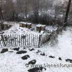 Frühling im Februar Winter im März