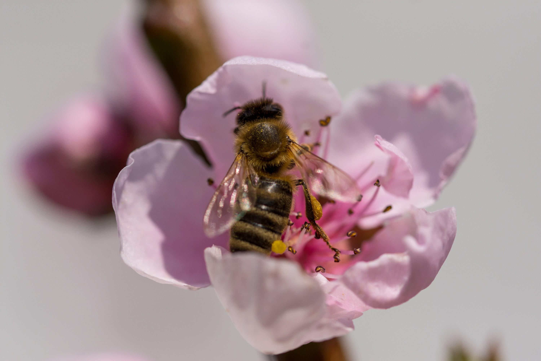 Bienenforum