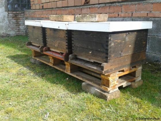 Meine ersten 3 Bienenvölker