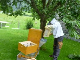 Honigernte Waagstock - Stand