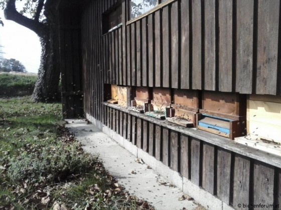 Mein Bienenhaus