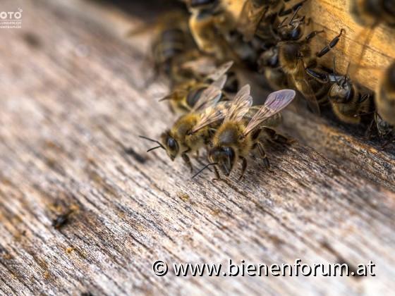 Bienenwächterinnen
