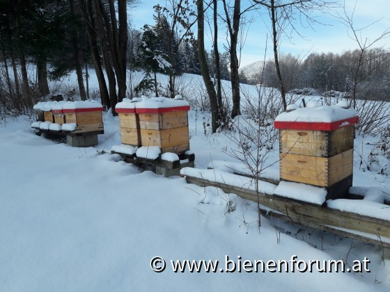 Bienenstand im Winter