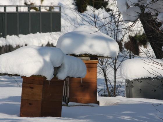 Beuten im Winter